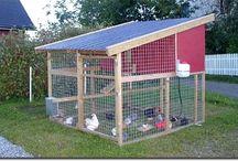 Høns i hage