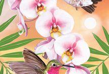 Kolibrík a Kvety
