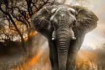 Elephants and Nature