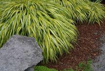 Rostliny venkovní