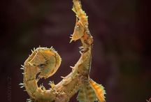 Amazing Creatures / by Debra Browning