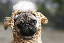 Pugs! And Other Dogs I Suppose.  / by Sarah Stout