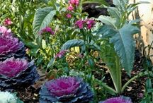 composición jardinería