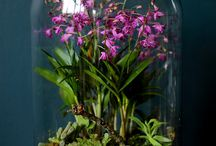 Orchids / Another of my addictions.. I have around 100 Cymbidiums, Epidendrum, Dendrobium,Zygo's & a few other types.. can't get enough. Some are my own pictures,others on my wishlist.