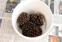 pine cones / decoration