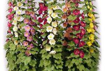 Miniature Flowers, Arrangements,Garden / by BRIANA JOHNSON