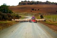 New Zealand Life