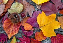 Autumn Colours / The colours & images of Autumn