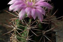 moje kaktusy