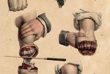 old school anatomy