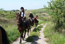 Agriturismo Il Mandorleto / Agriturismo, turismo, enna, equitazione