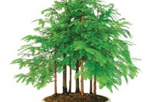Bonsai Trees / by Pro Home Stores