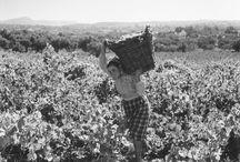 Vintage Vineyards