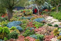 Succulent garden of Attila and Michele Kapitany / These photos by Tim Entwisle capture the beautiful jewel-box look of a succulent garden near Melbourne, Australia