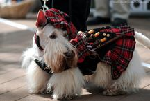 :All Things Scottish: / by Meghan