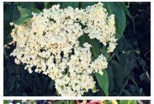 Medisinske planter
