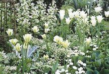 Green fingers | White Garden