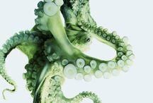 Oktopoden & Quallen