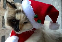 Christmas Lola
