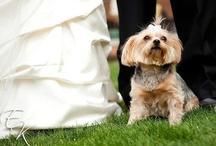 ee weddings: chelsey + clayton