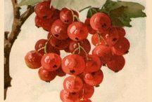 ягоды виноноград и т д