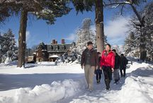 Our Winter Wonderland / Join our students for a walk in the snow, and get a glimpse of our beautiful snowy campus! / by Pine Manor College