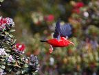 Birds of Hawai'i / Images of Hawaii's native birds caught on camera on rainforest tours