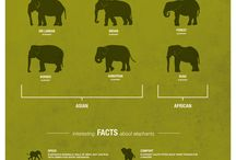 Animals Infographics / Collection of Cool Infographics that gives you information about Animals.
