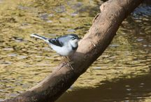 Birding Photography / See what birds we photographed