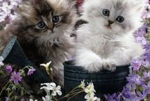 Lyra's kittens