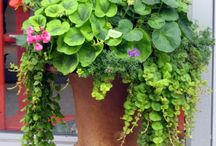 outdoor flower ideas  / by Kelly Sutton