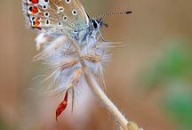 Papillon, ce billet doux plié cherche une adresse de fleur .Jules Renard