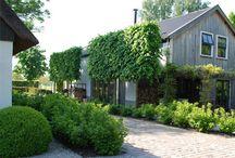 Garden :: Foundation Plantings