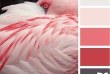 Color Combos & More / by Julie Davis