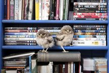 Babies :)! / by Tania Turner-Haggerty