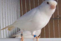 canarios y aves exoticas