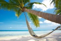 Maledivy palma