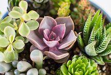 Sukulentová záhrada