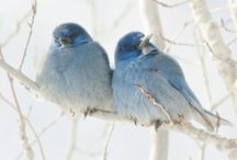 Bluebirds / by Marian McLemore