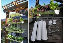 How Does Your Garden Grow? / by Rachel Eder