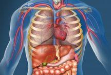 Het lichaam