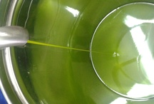 Extra virgin olive oil Terre Rosse