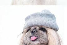 Cute doggie
