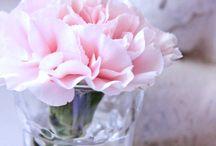 PINK / everything pink, flowers, marshmellows, rosa, pink, prints...
