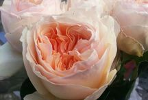 tipuri de flori