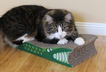 Cat: Giveaways1