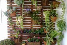 plants inhouse