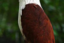exotic birds and animals etc.