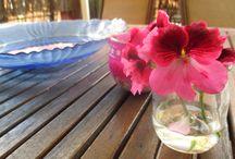 Flores Naturaleza / Estas fotos son de mi cámara y yo :)