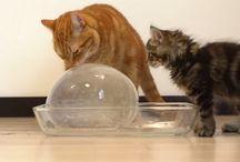 Petits trucs pour nos chats